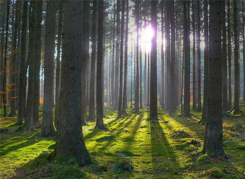 Фото связанные в лесу 17 фотография
