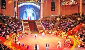 Шоу «Аравийских верблюдов», едет в Белорецк!