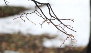 В первой декаде марта в Башкирии будет наблюдаться аномально теплая погода