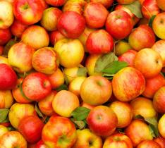 Яблоки. Все о яблоках
